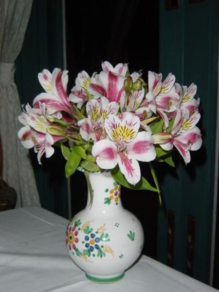 Альстрёмерия — волшебный цветок инков. Как его вырастить?