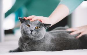 Как выбрать породу кота, ориентируясь по своему знаку Зодиака?