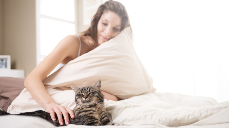 На что обращать внимание, если кошка спит с вами в одной постели?