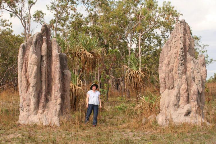 Термитники некоторых видов термитов достигают рекордных для беспозвоночных размеров