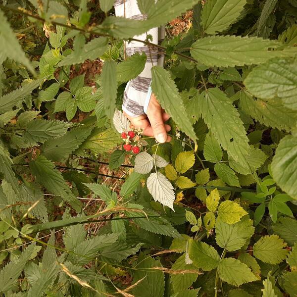 Каких растений стоит опасаться?