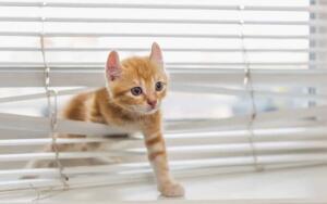 Что лучше — рулонные шторы или жалюзи?