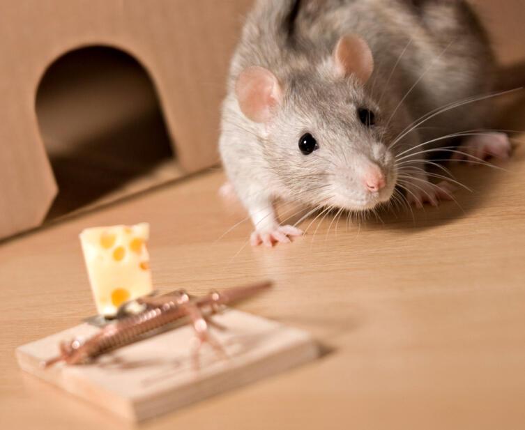 Что нужно знать, если у вас появилась аллергия на животных?