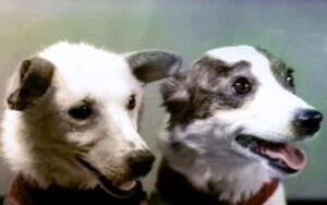 Как собаки помогали ученым исследовать космическое пространство?