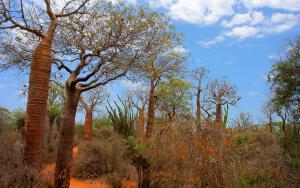 Как вырастить колючий мадагаскарский лес на подоконнике?