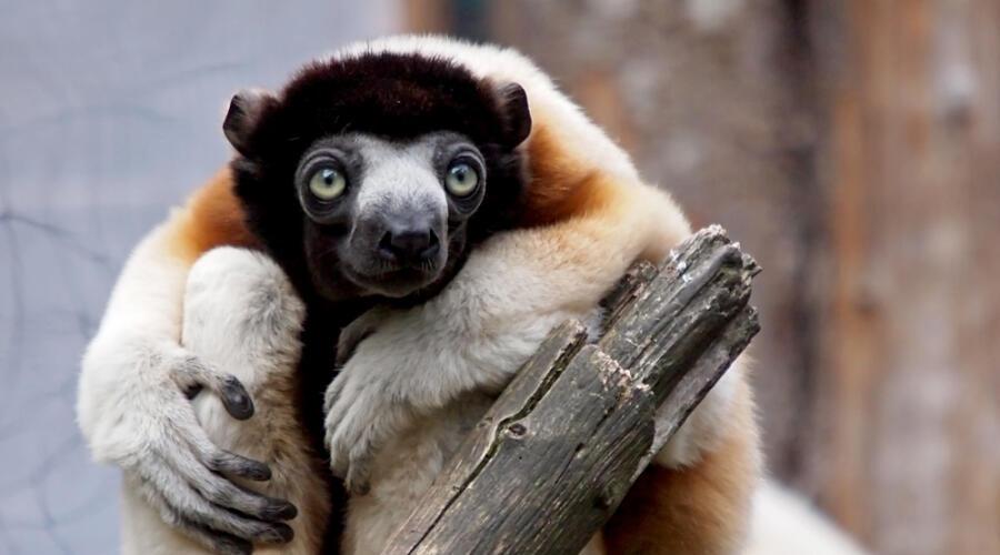 Какие чудеса происходят в Каменном лесу Мадагаскара?