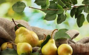 Чем полезна груша?