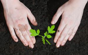 Как выращивать сеянцы?