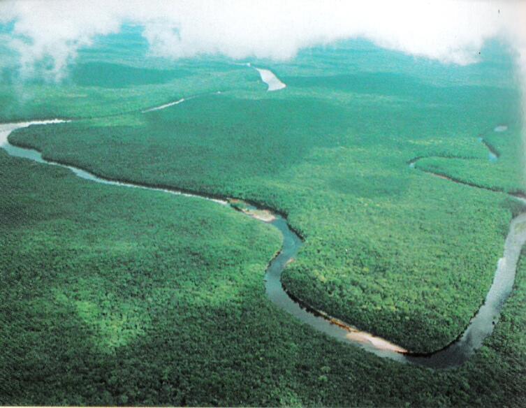 Леса в дельте Ориноко, штат Дельта Амакуро, Венесуэла