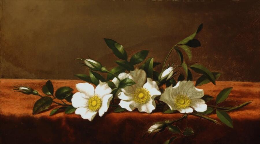 Мартин Джонсон Хед, «Розы чероки (Ветка шиповника)», 1890 г.