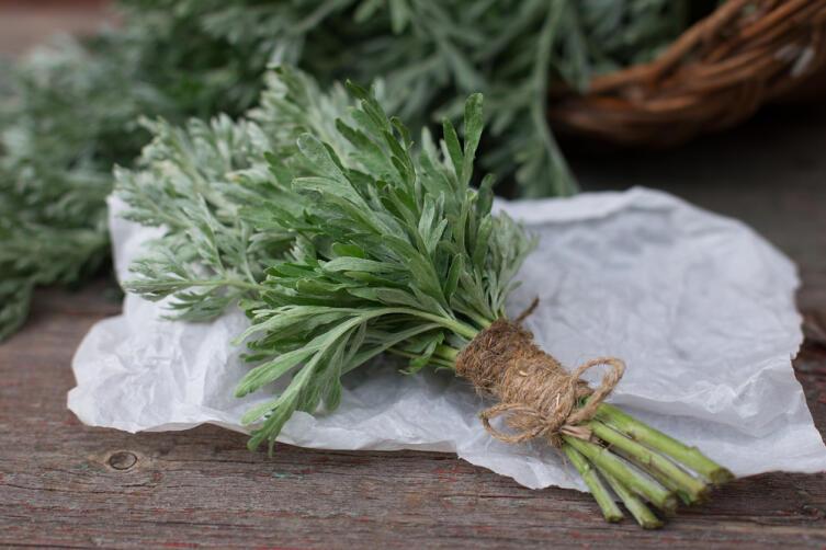 Что за растение полынь лечебная?