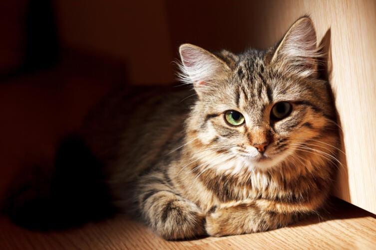 Какой знак Зодиака покровительствует вашему коту и как влияет на его характер?