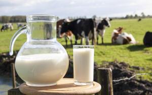 Что вы пьёте, наливая в стакан молоко?
