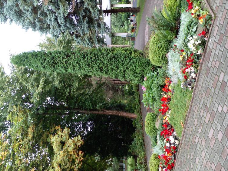 Уголок санаторского парка