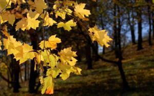 Как в день осеннего равноденствия загадать желание, чтобы оно непременно исполнилось?