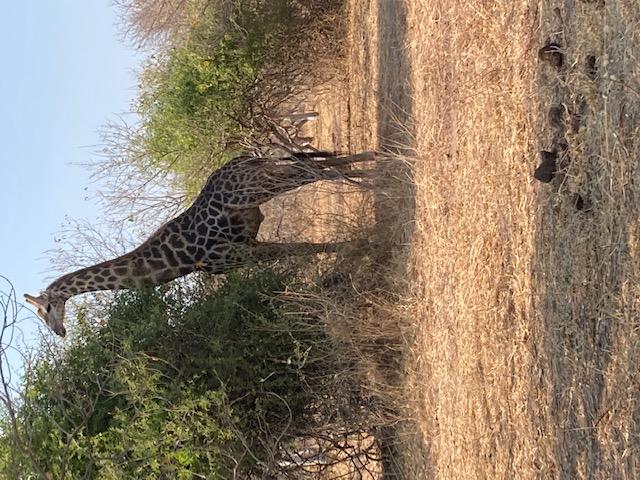 Путешествие по Южной Африке. Где искать экзотику?