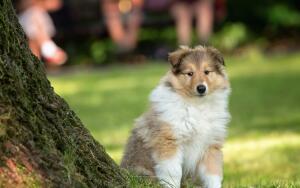 Какие породы собак подходят разным знакам Зодиака?