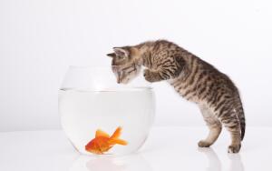 Какие домашние животные плохо уживаются в одном помещении?