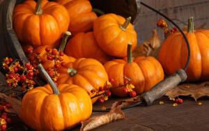 Что можно приготовить осенью из тыквы?