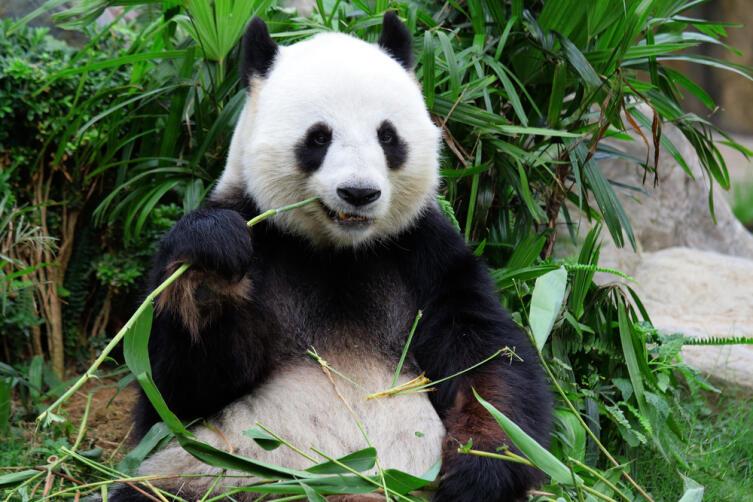 Каких животных, бывших на грани исчезновения, удалось спасти?