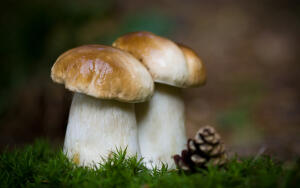 Что мы знаем о грибах?