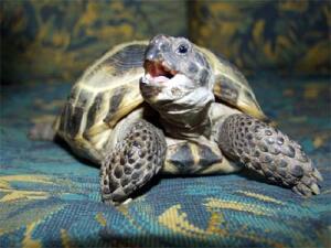 Потерявшаяся черепашка нашлась в запертой комнате спустя...  30 лет!