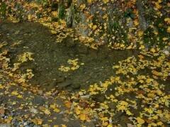 Осенние листья придают особый шарм