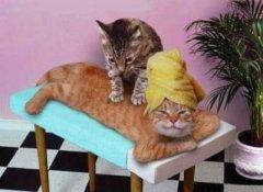 Кого  выбрать: кота или кошку?