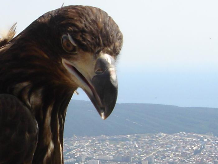 Как орел стал царской птицей