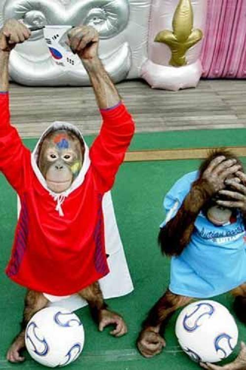 Прикольные картинки болеющих за футбол, надписью