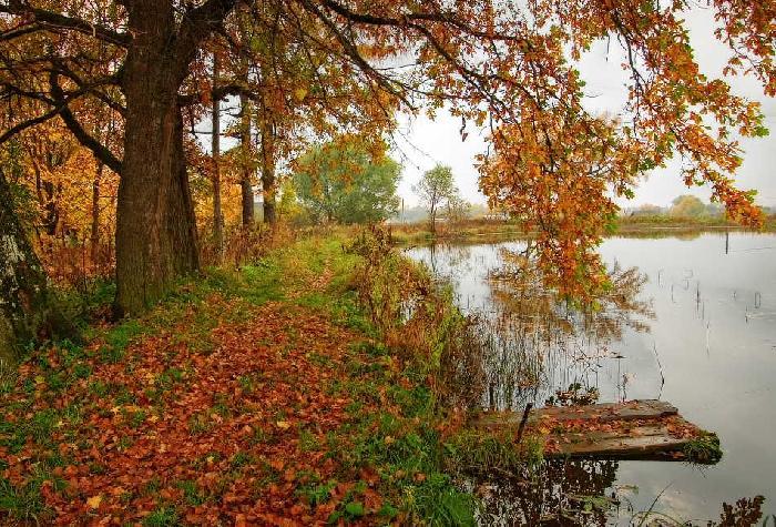 Картинки осени красивые - 265c4