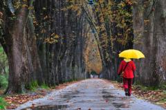 Примета такая есть: если пришел дождливый октябрь, то грибы лучше всего искать в наиболее сухих местах.