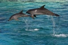 Звуки, издаваемые дельфинами, уже давно используются в качестве музыки для релаксации...