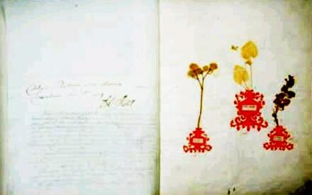 Гербарий с подписью лейб-медика Арескина и датой 1709г.