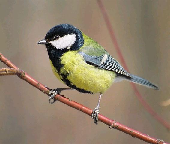 Фото - Важная птица - Отличный подарок.