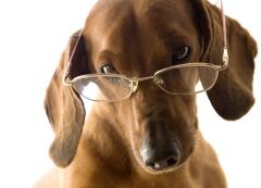 Знаете ли вы, что?.. Удивительные факты о зрении животных