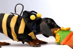 С особым трепетом и горячей любовью собачка будет относиться к мягким игрушкам...