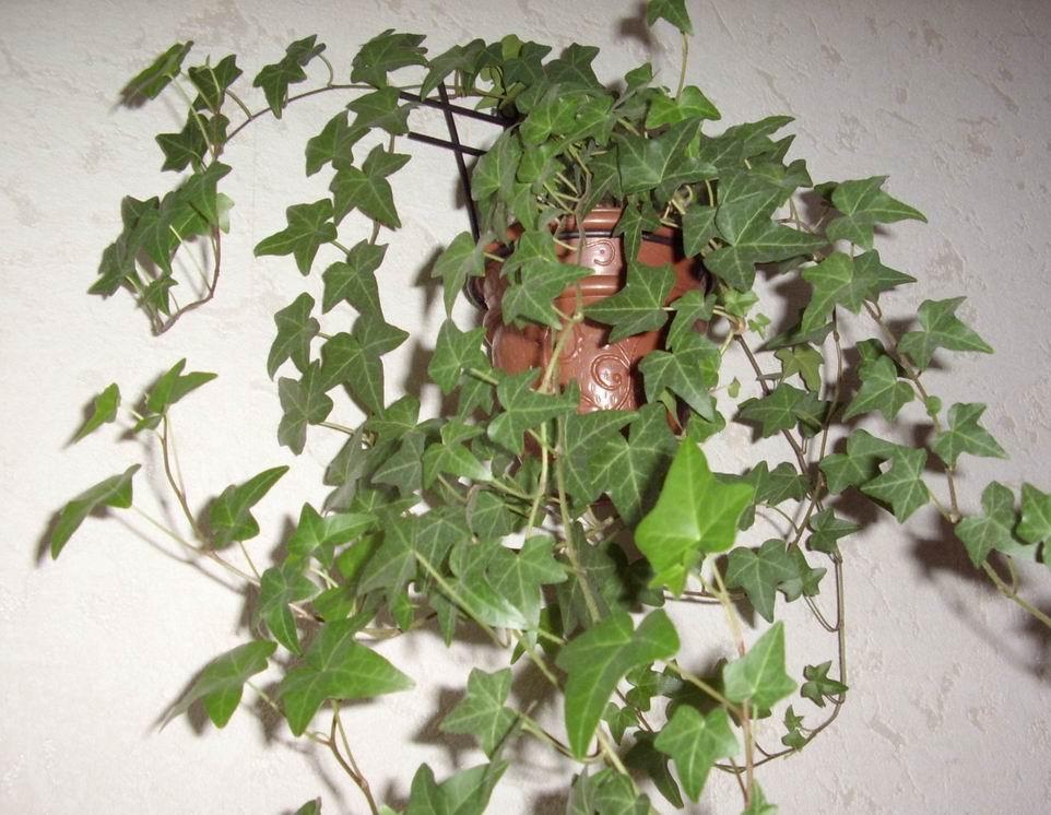 Какие комнатные растения выращивать в
