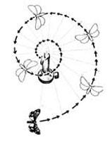 Пытаясь выдержать по отношению к лучам 80 градусов, мотылек попадает в смертельную спираль.