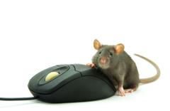А ведь когда-то компьютерная мышь тоже напоминала скорее крысу...