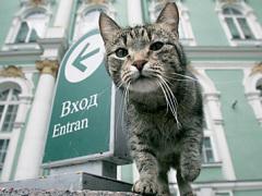 Василию прощается все, ведь он самый известный из эрмитажных котов.