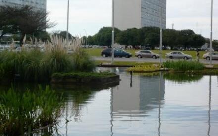 Цапля на пруду перед дворцом Итамарати в центре столицы многомиллионной страны