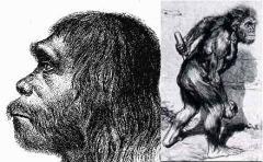 Неандерталец, практически ничем не отличающийся от современного человека, преднамеренно изображается эволюционистами подобным обезьяне