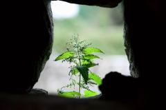 День сорняка... будем праздновать? 19 июня - Попольники