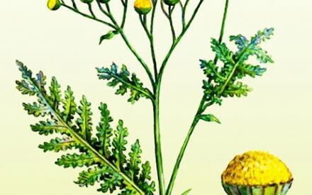 растения от паразитов человека