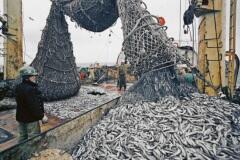 Вот удачный улов - столько рыбы  за один подъём!