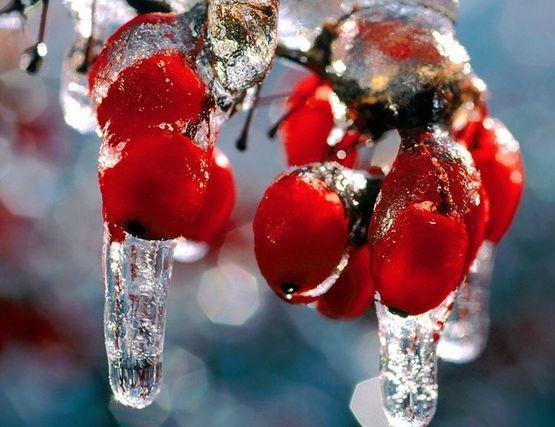 Яркие гроздья рябины - эти осенние дары природы как бы созданы для того, чтобы напоследок побаловать нас.