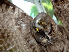 Что мы знаем о сове, или Какая птица самая умная?