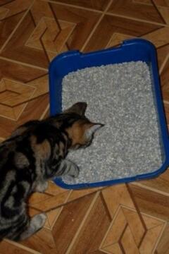 Как приучить котенка к горшку
