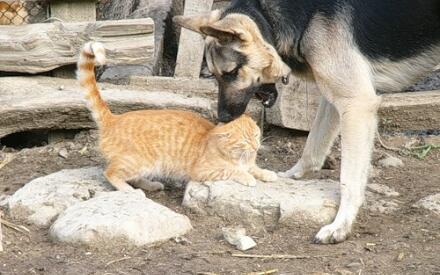Обрадуется ли коту ваш любимый пес, например?